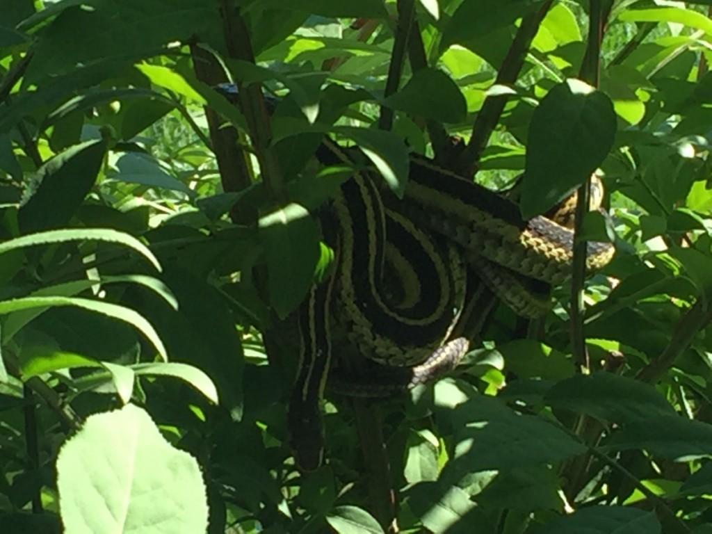 Opencity Inc, Love Lose September, Snake